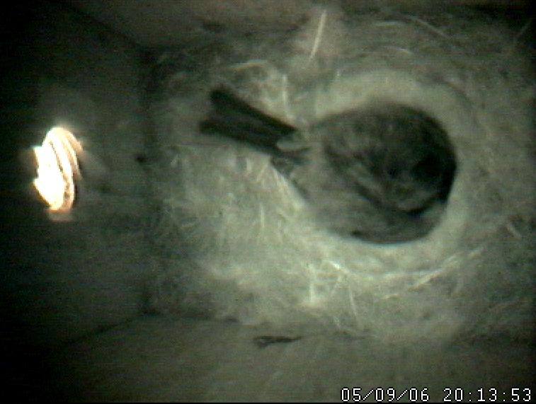 In the nest.JPG