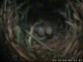 Sparrow Egg 2.JPG
