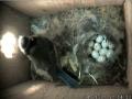 Egg12.jpg