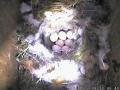 09-04-26 Egg 7.jpg
