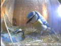 11-05-03 Male Feeding 2.jpg