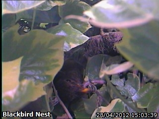20120428 First chick having a look.jpg