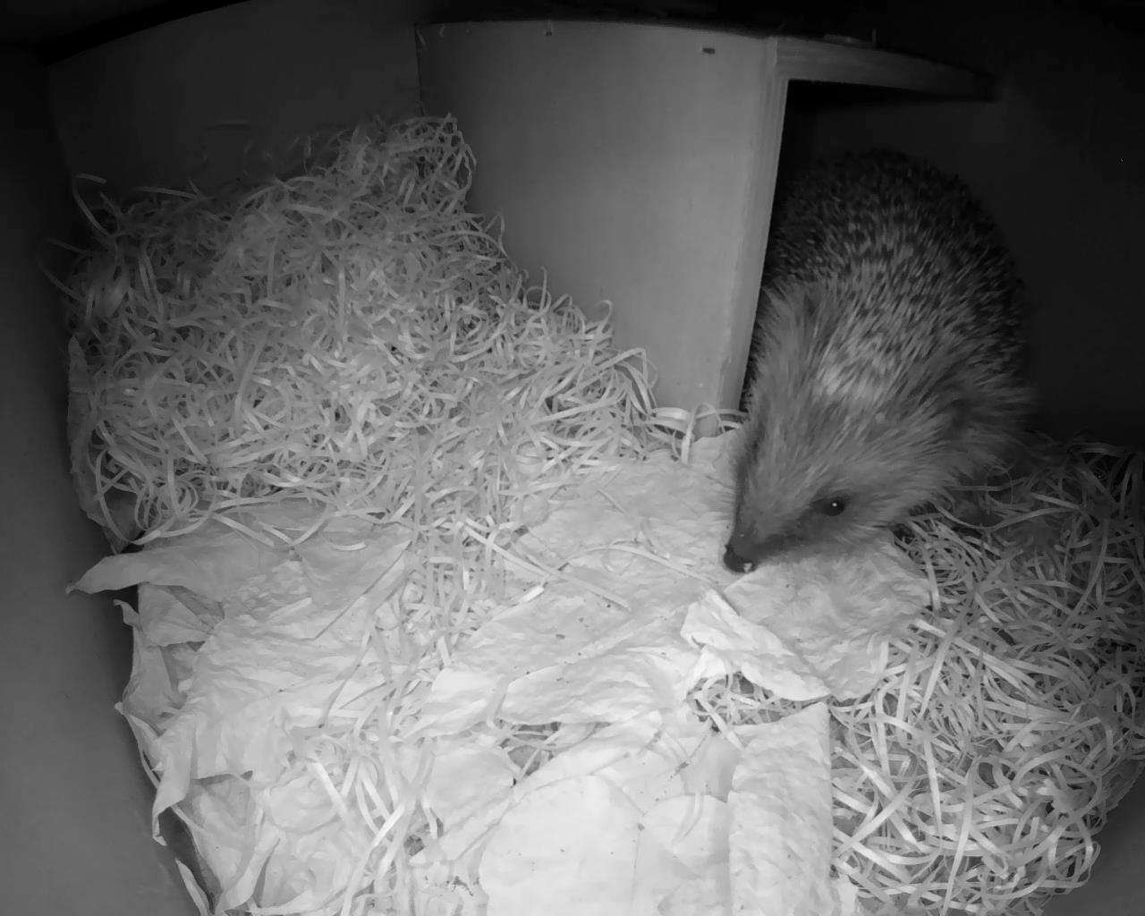 Hedgehog Box 2016-04-17 21-11-51.137