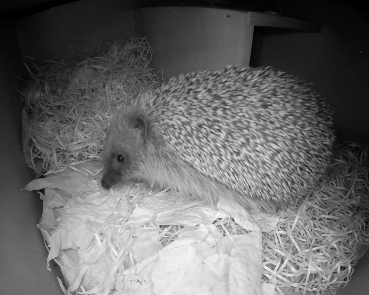 Hedgehog Box 2016-04-17 21-12-16.606