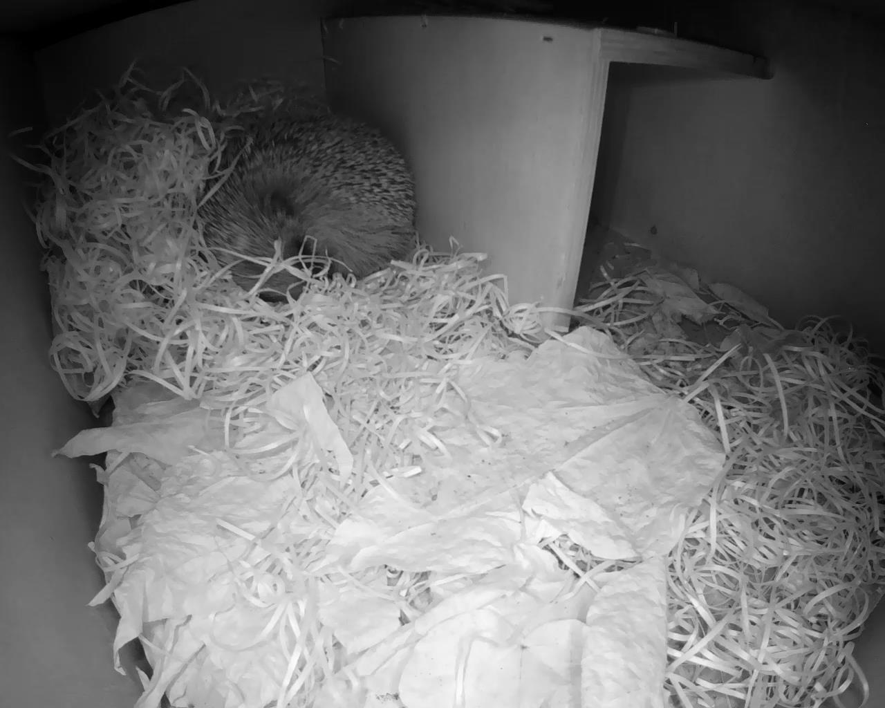 Hedgehog Box 2016-04-17 21-19-44.028