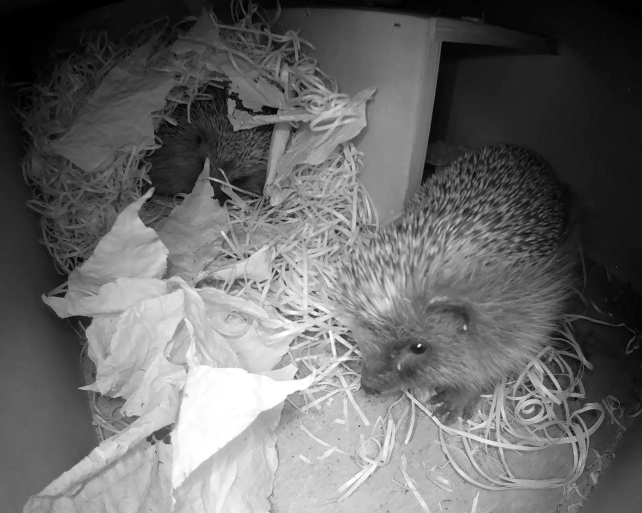 Hedgehog Box 2016-04-28 21-54-31.297