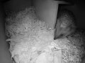 Hedgehog Box 2016-04-17 21-11-51.137
