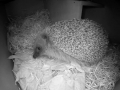 Hedgehog Box 2016-04-17 21-12-16.606