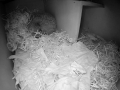 Hedgehog Box 2016-04-17 21-19-44.028