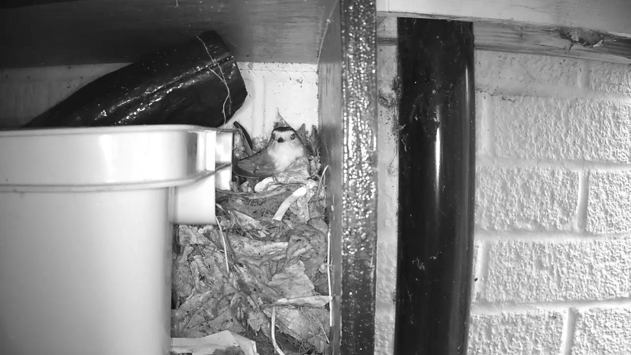 Robin Nest 2016-04-15 09-19-44.034