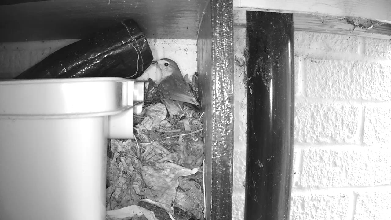 Robin Nest 2016-04-15 10-53-34.312