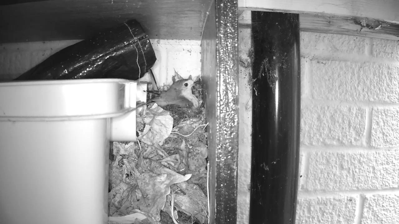 Robin Nest 2016-04-15 11-23-23.722