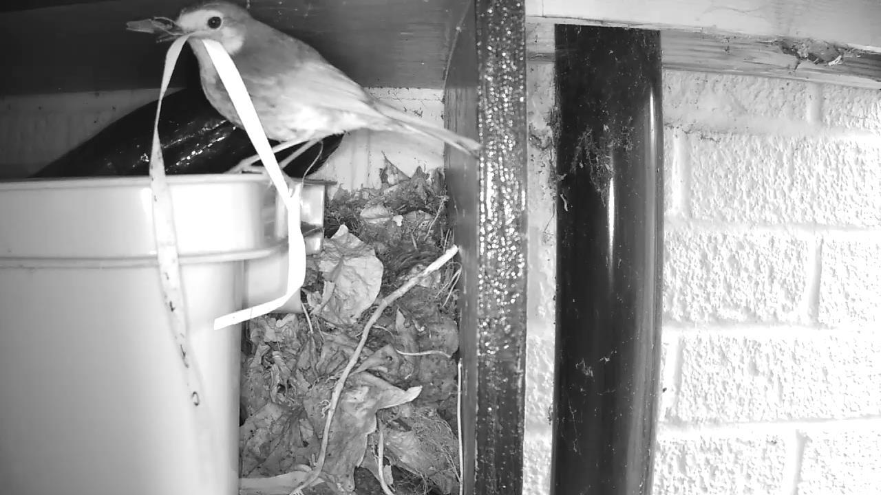 Robin Nest 2016-04-15 11-46-40.430