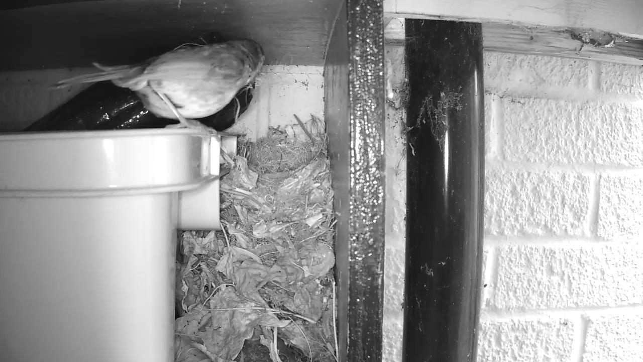 Robin Nest 2016-04-18 10-35-16.890