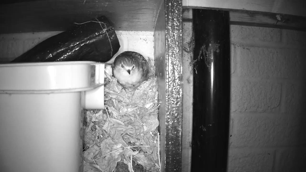 Robin Nest 2016-04-25 05-12-29.315