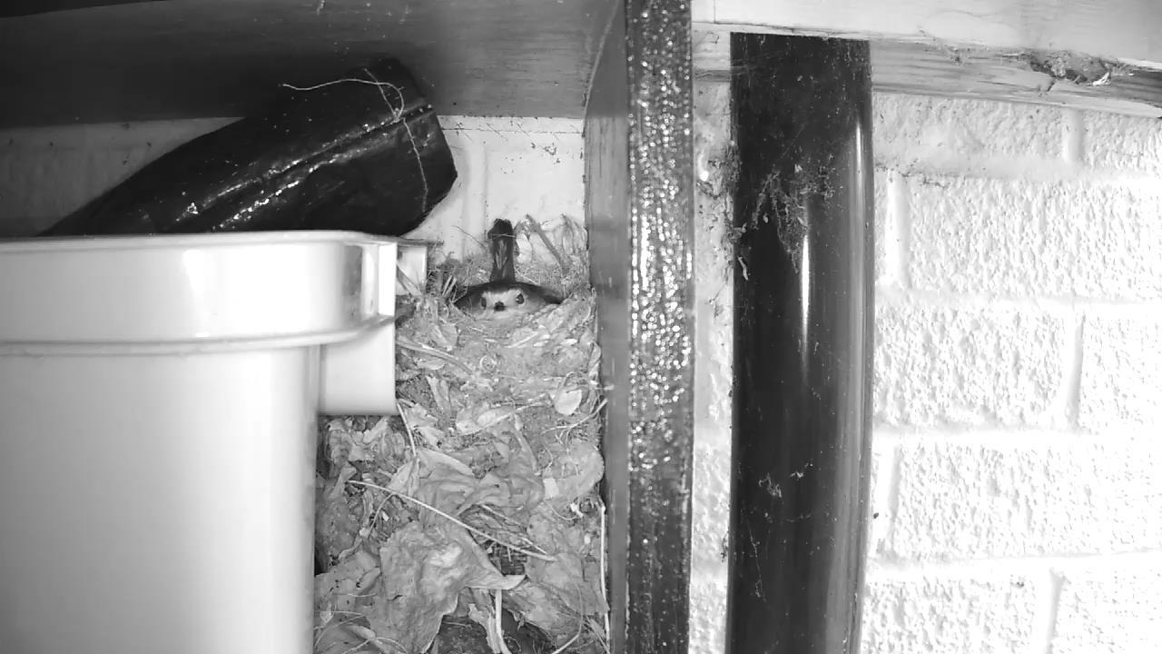Robin Nest 2016-04-25 15-27-45.154