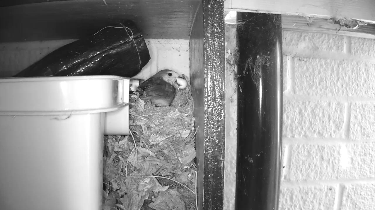 Robin Nest 2016-05-08 11-47-50.847