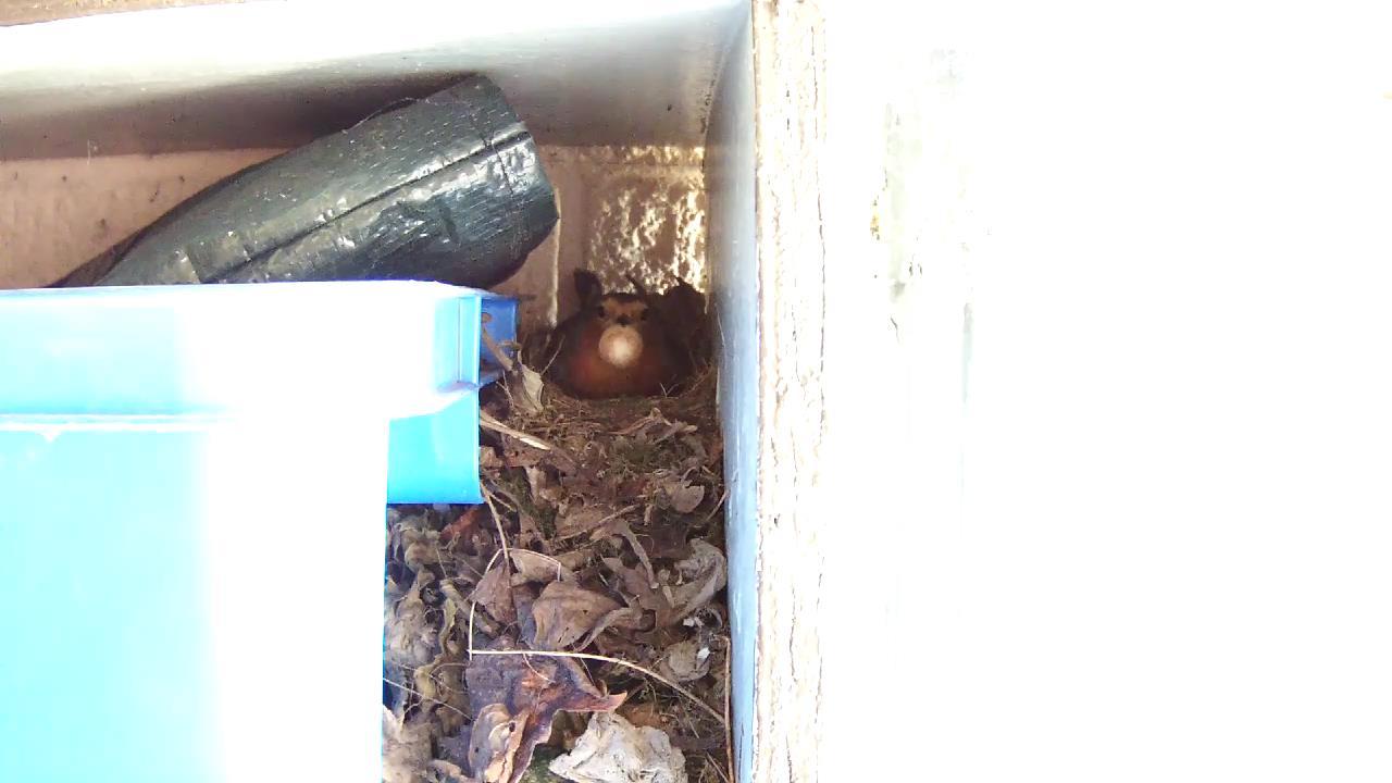 Robin Nest 2016-05-08 13-30-49.033