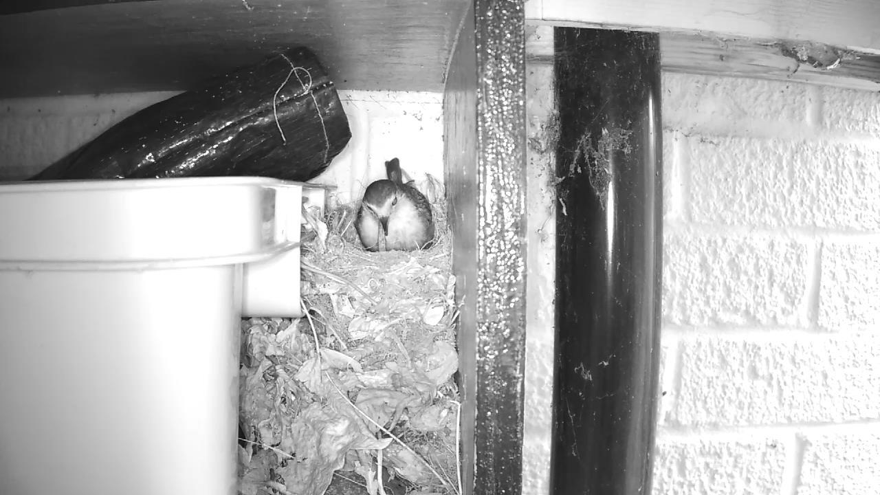 Robin Nest 2016-05-09 07-35-42.117