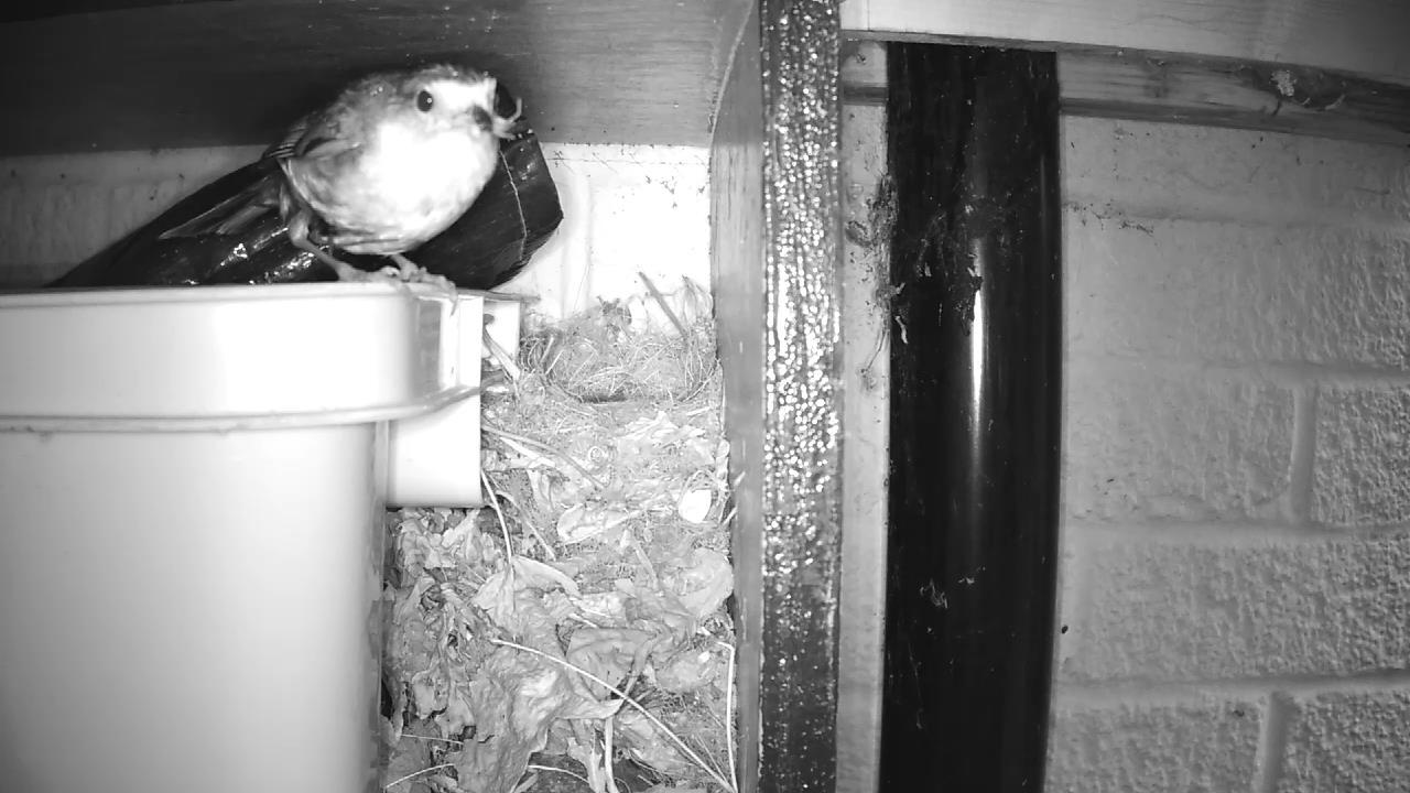 Robin Nest 2016-05-10 06-21-06.915