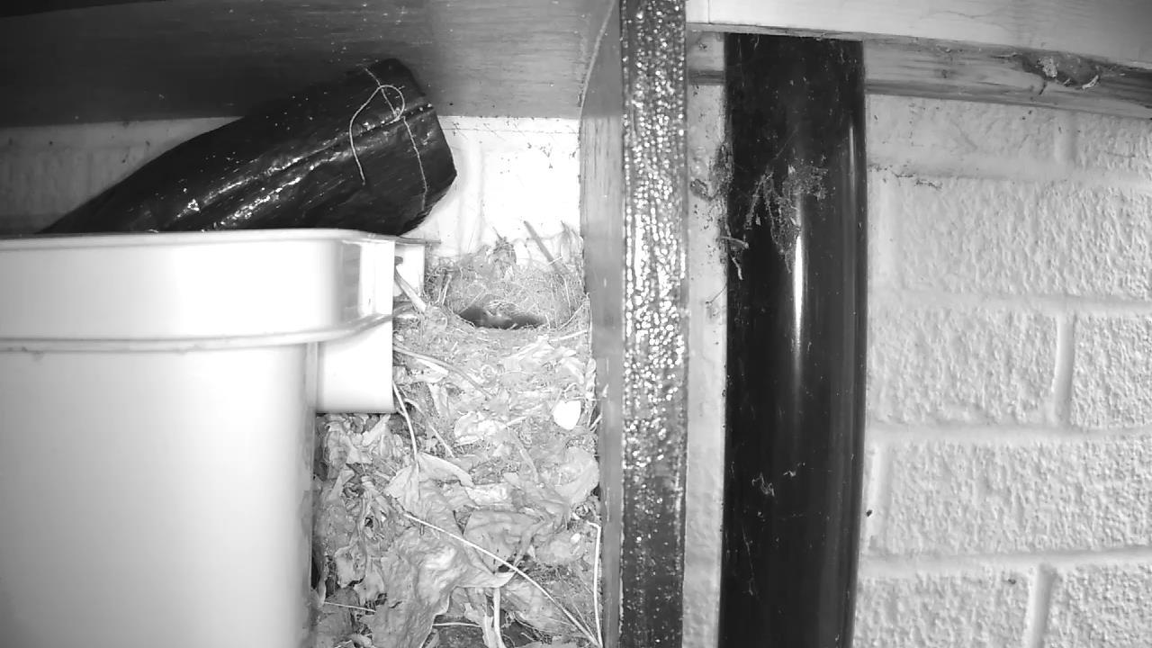 Robin Nest 2016-05-10 19-42-26.760