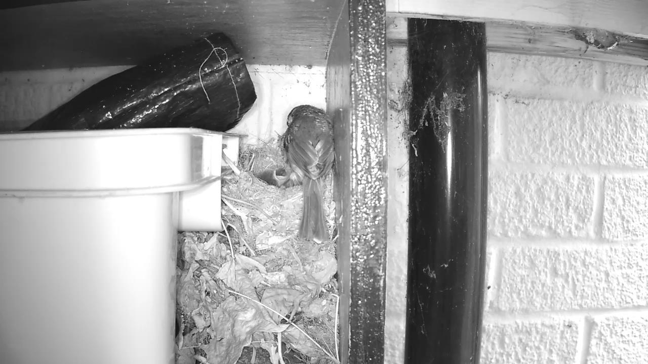 Robin Nest 2016-05-11 09-19-21.513