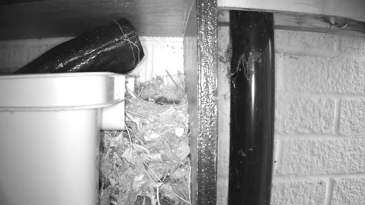 Robin Nest 2016-05-11 19-51-35.440