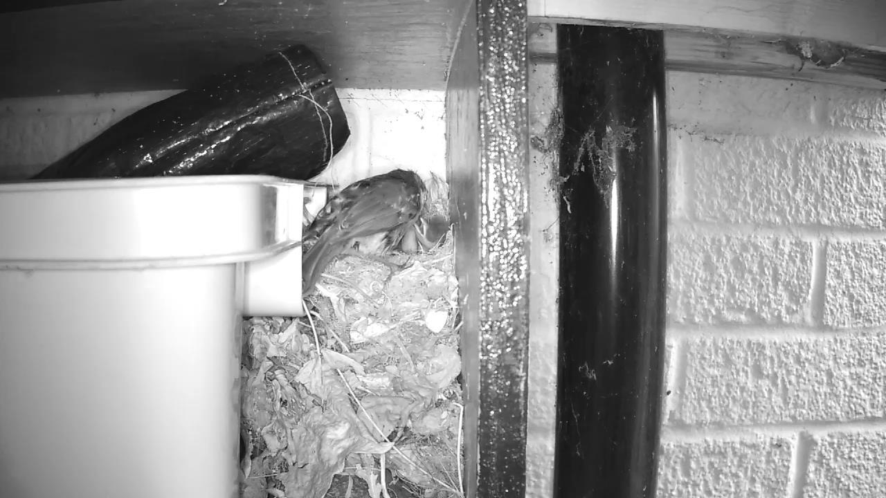 Robin Nest 2016-05-12 06-26-00.747
