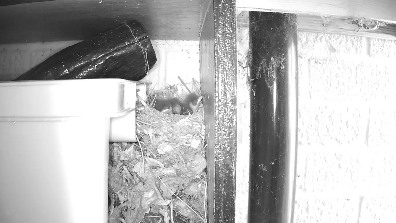 Robin Nest 2016-05-12 13-49-52.939