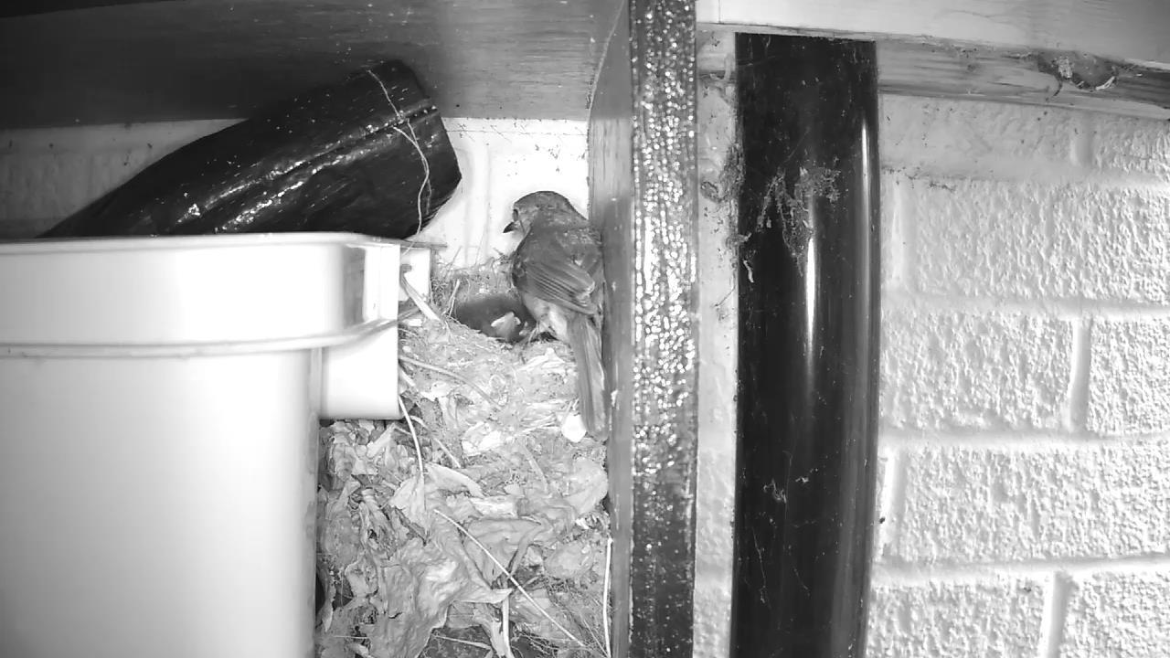 Robin Nest 2016-05-13 06-14-18.104