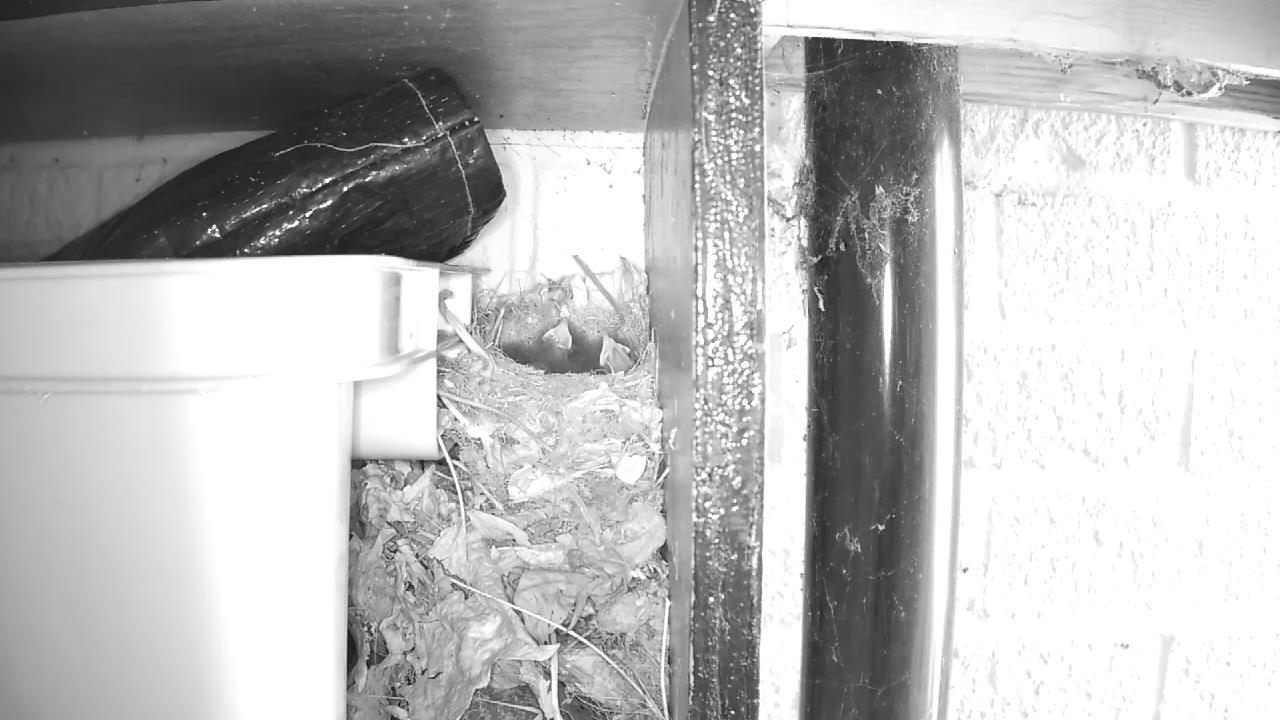 Robin Nest 2016-05-13 15-03-08.672