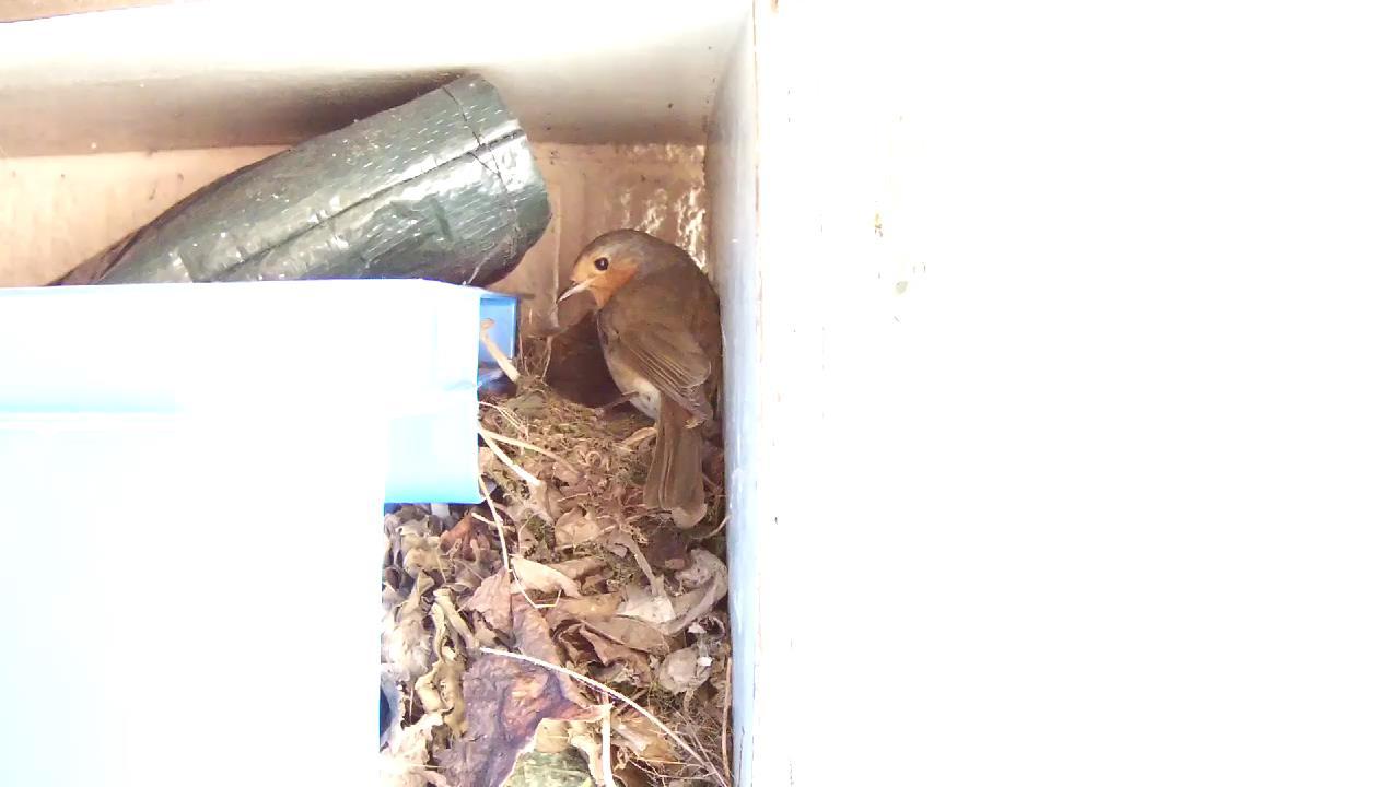 Robin Nest 2016-05-13 17-20-44.053