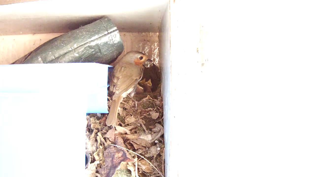 Robin Nest 2016-05-13 18-40-52.872