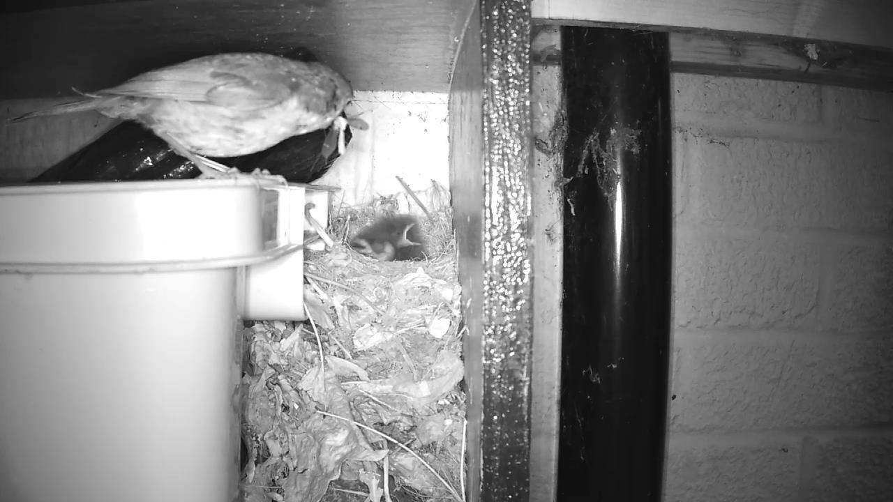 Robin Nest 2016-05-14 05-04-16.072