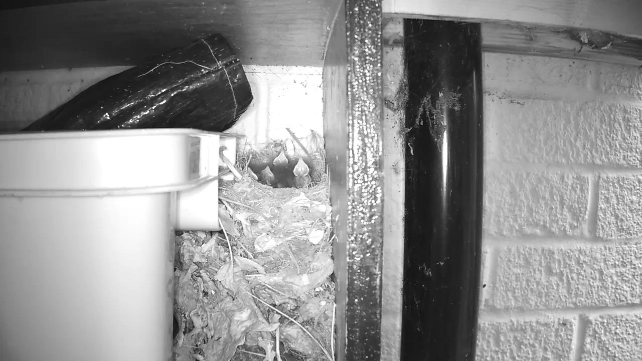 Robin Nest 2016-05-14 06-02-51.293