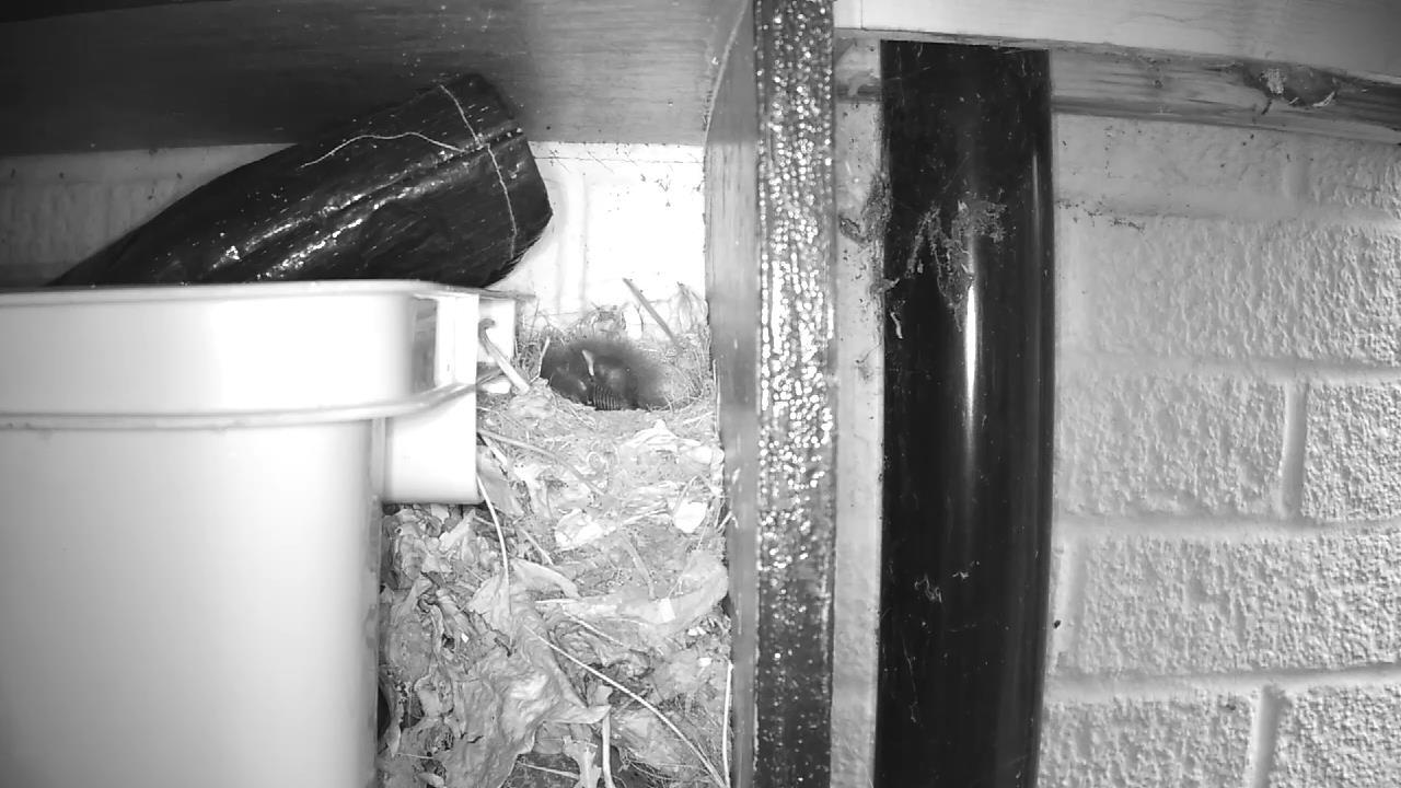 Robin Nest 2016-05-14 06-03-57.999