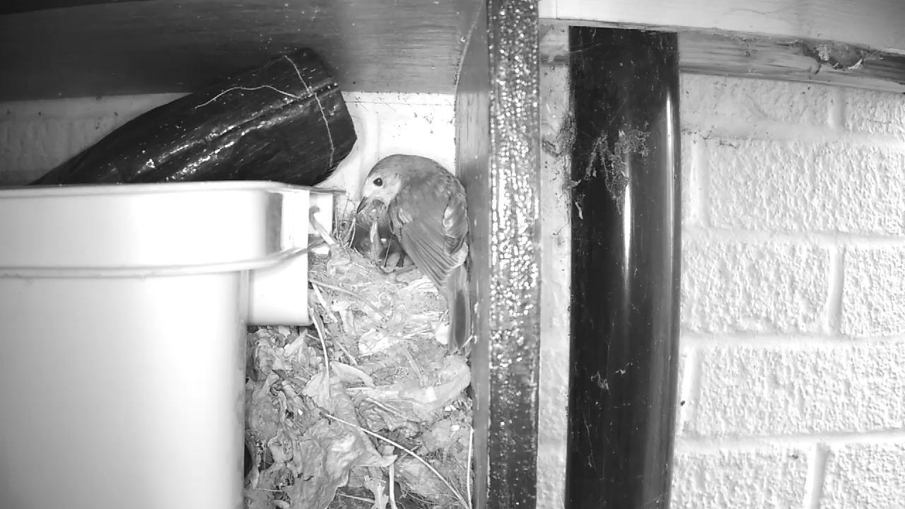 Robin Nest 2016-05-14 07-37-51.182