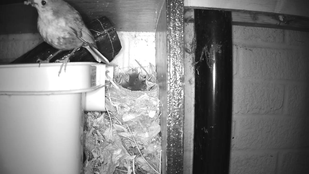 Robin Nest 2016-05-15 04-41-39.764