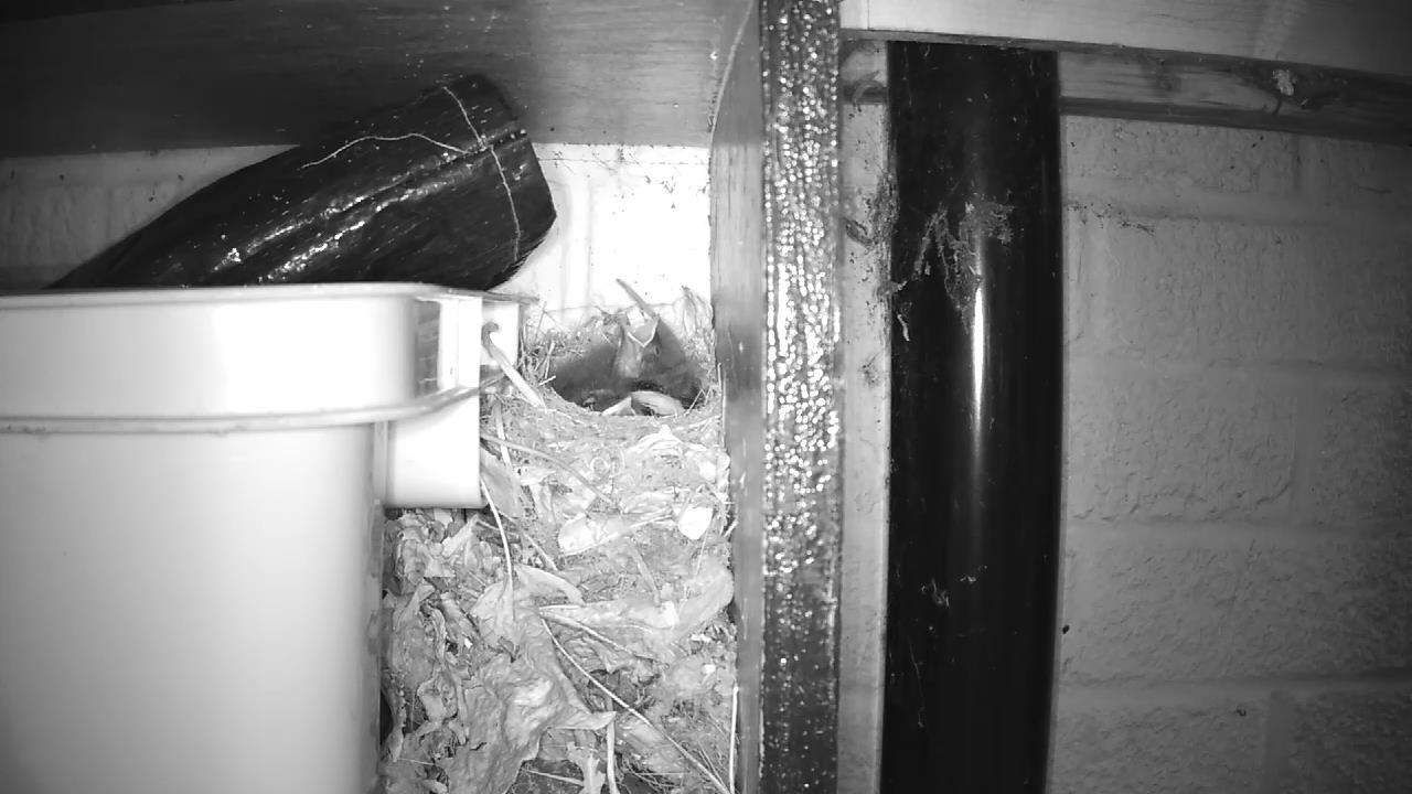 Robin Nest 2016-05-15 05-02-14.653