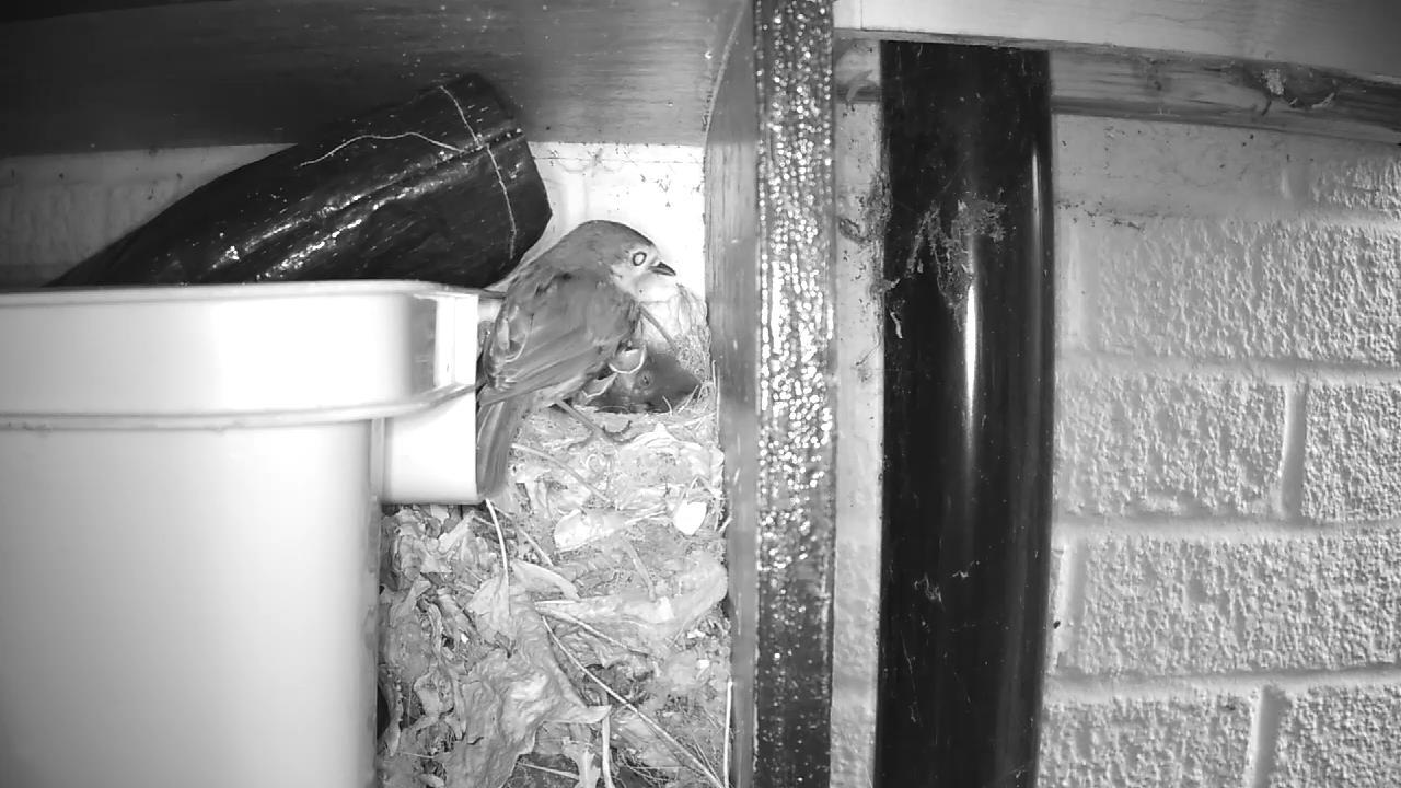 Robin Nest 2016-05-15 06-07-29.560