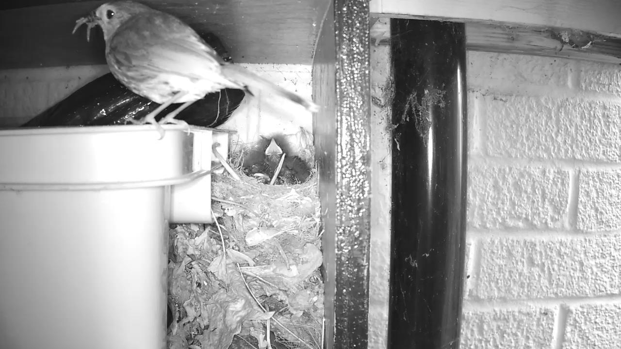 Robin Nest 2016-05-17 06-46-20.833
