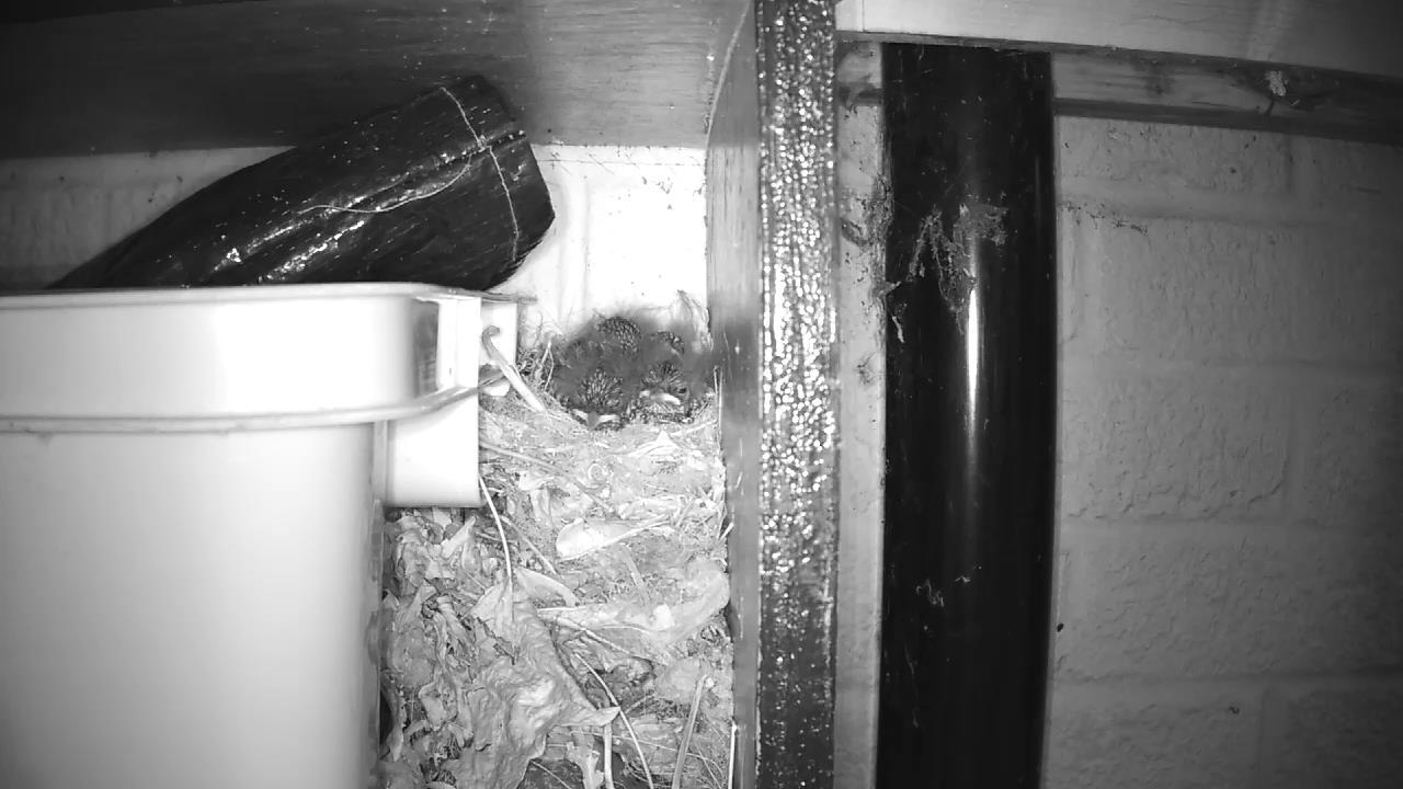 Robin Nest 2016-05-17 20-49-16.701