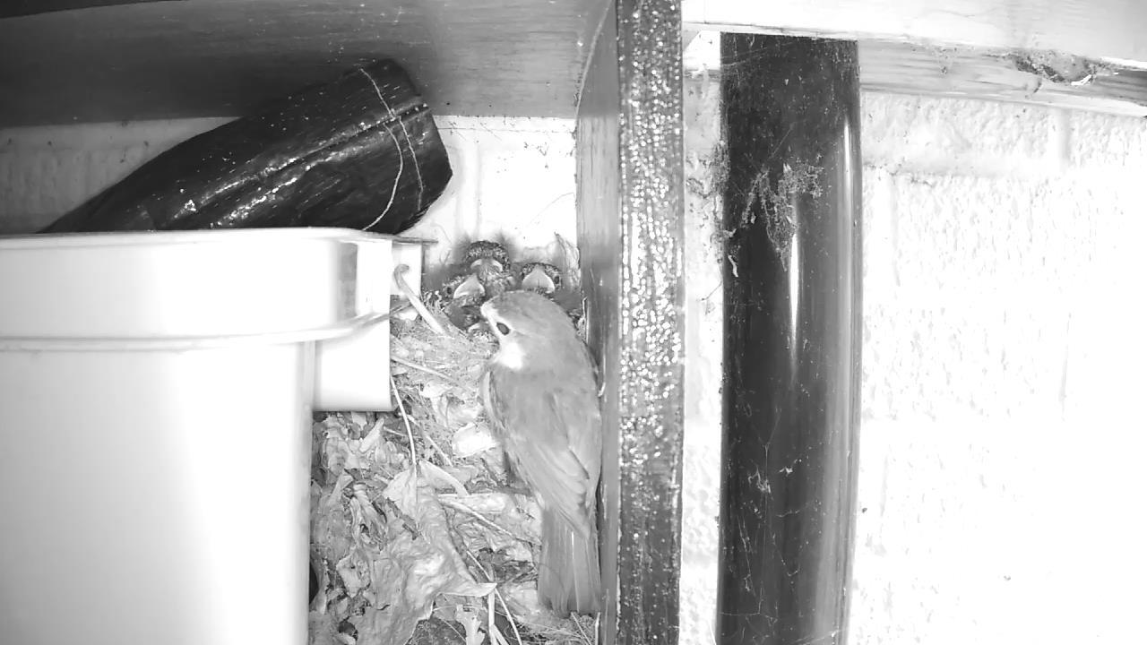 Robin Nest 2016-05-19 08-55-34.149