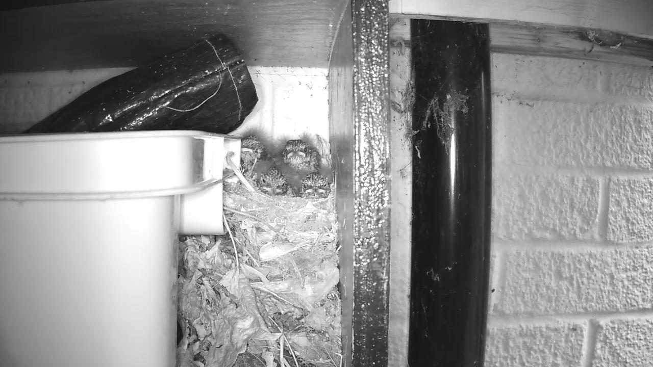 Robin Nest 2016-05-19 19-29-01.645