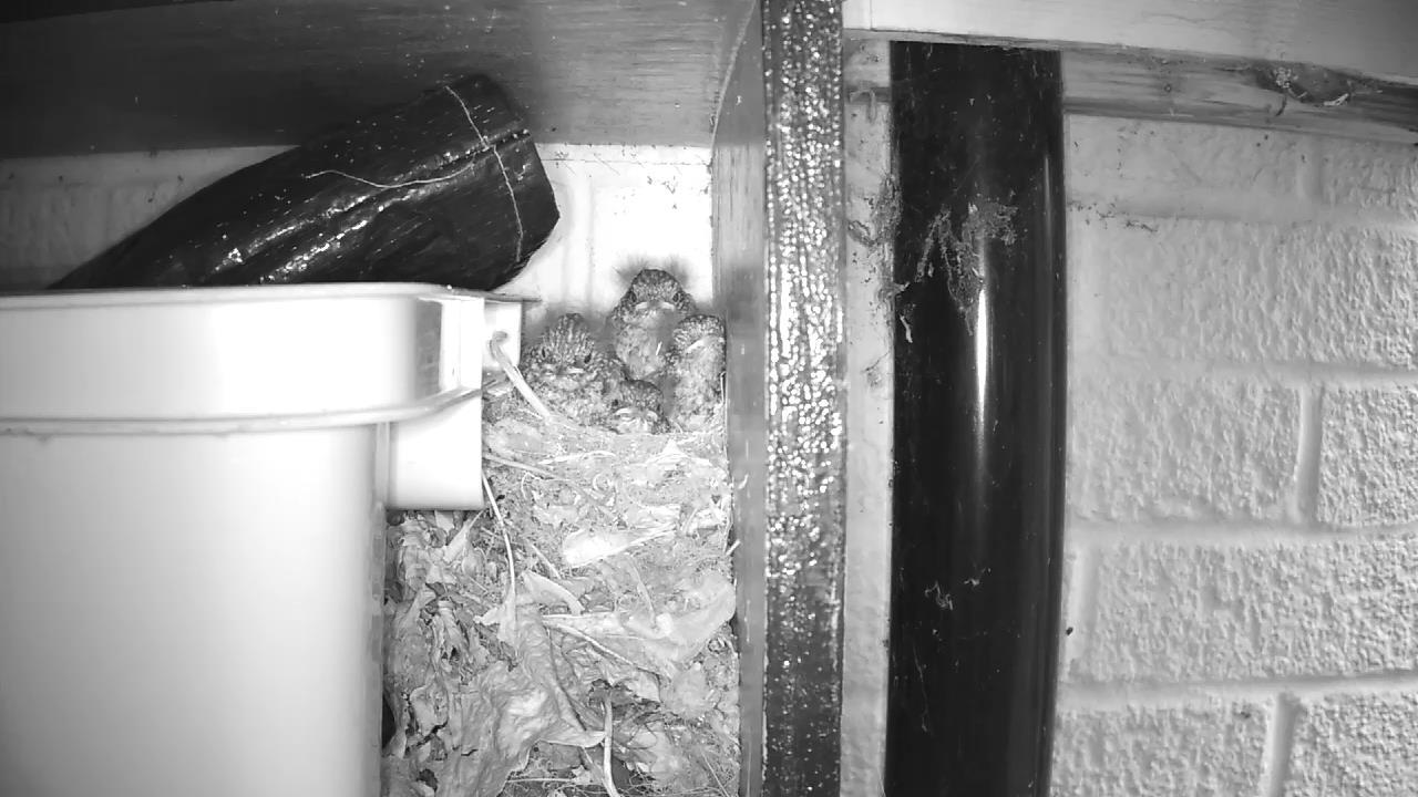 Robin Nest 2016-05-21 06-11-07.216
