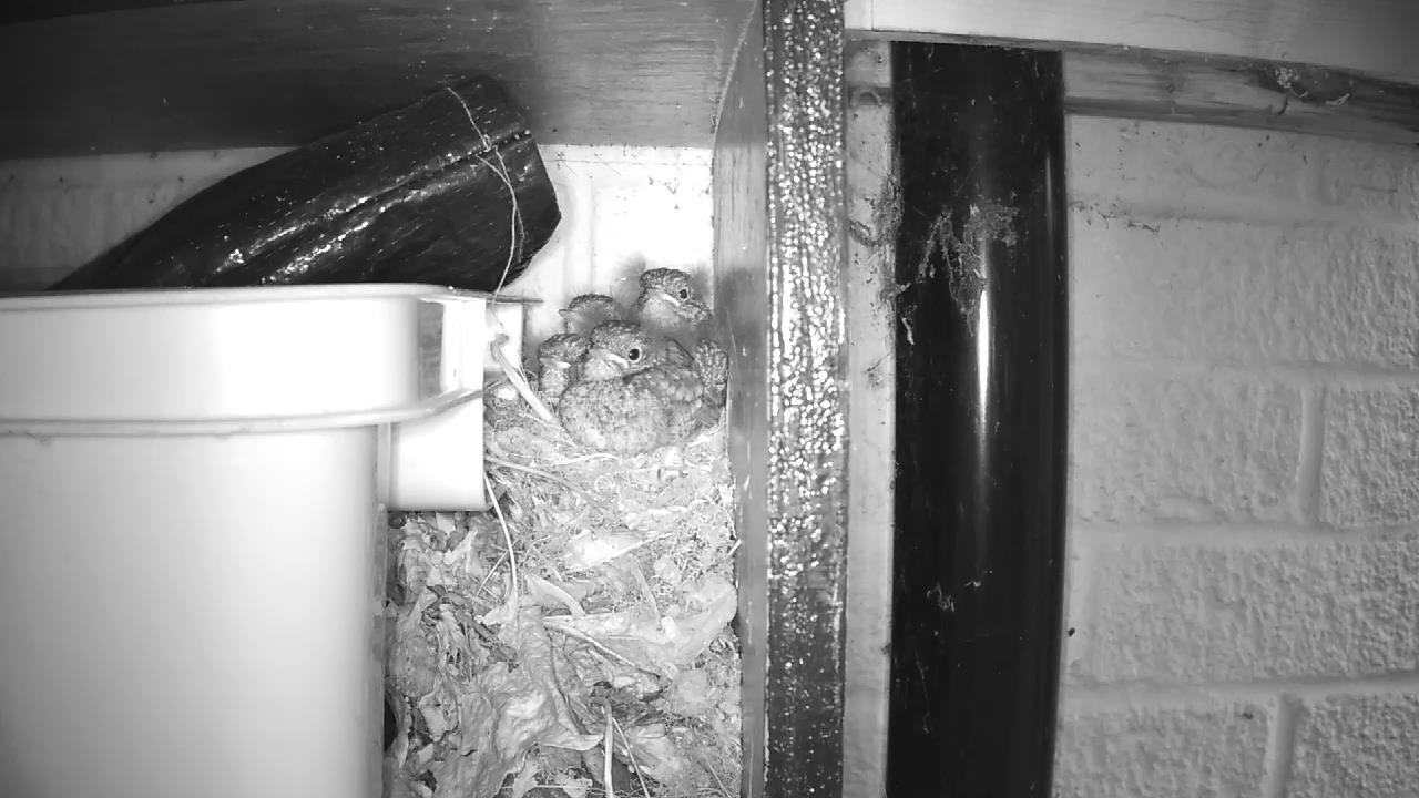 Robin Nest 2016-05-21 20-27-35.837