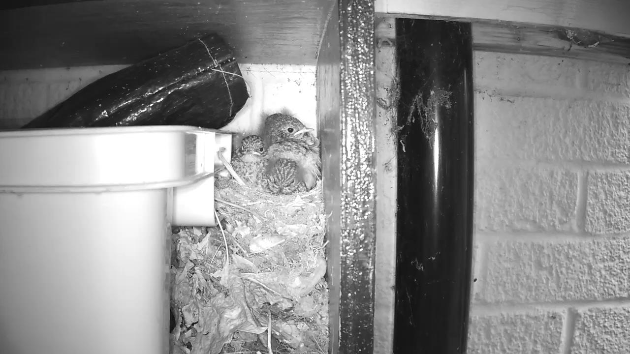 Robin Nest 2016-05-22 05-59-42.886