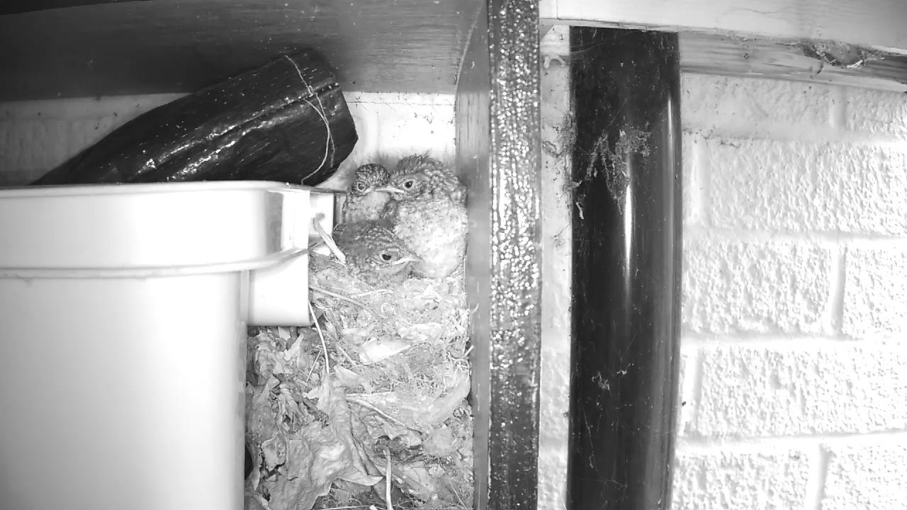 Robin Nest 2016-05-22 07-02-30.811