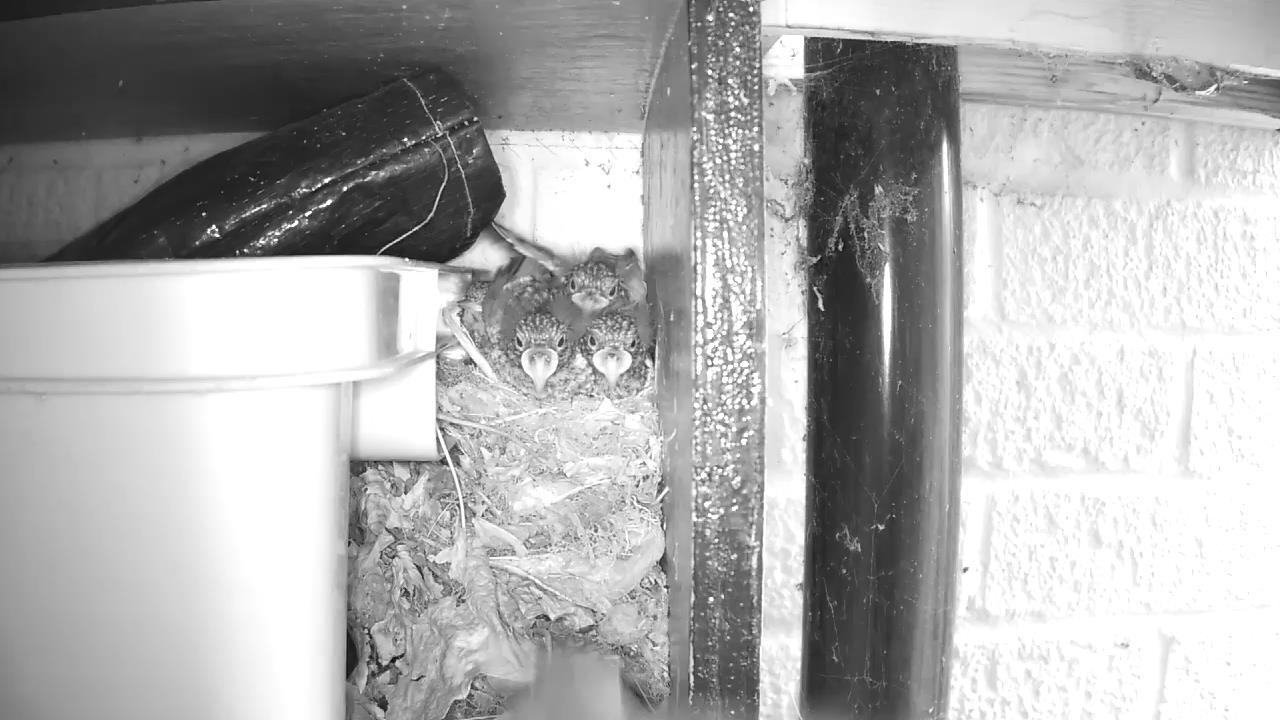Robin Nest 2016-05-22 09-53-48.237