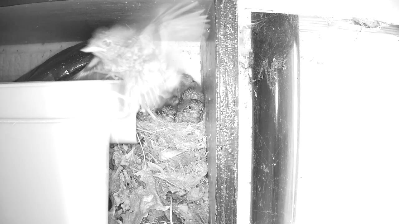 Robin Nest 2016-05-22 12-34-03.897